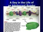 a day in the life of an adolescent reader1
