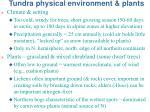 tundra physical environment plants