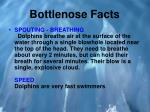 bottlenose facts3