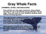 gray whale facts1