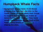 humpback whale facts3