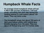humpback whale facts5