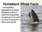 humpback whale facts8