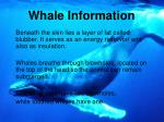 whale information2