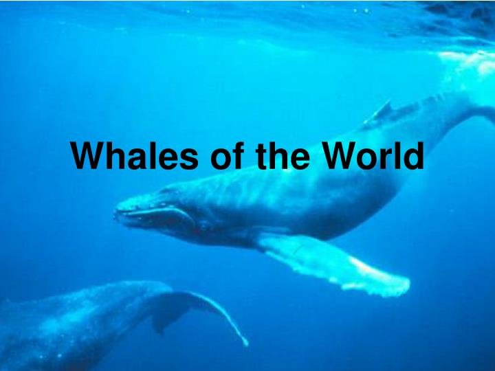 whales of the world n.