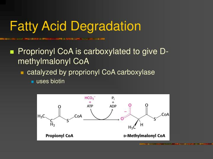 Fatty Acid Degradation
