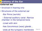 anatomy of the ear1
