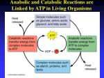 anabolic and catabolic reactions are linked by atp in living organisms
