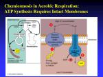 chemiosmosis in aerobic respiration atp synthesis requires intact membranes