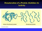 denaturation of a protein abolishes its activity