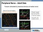peripheral nerve adult data