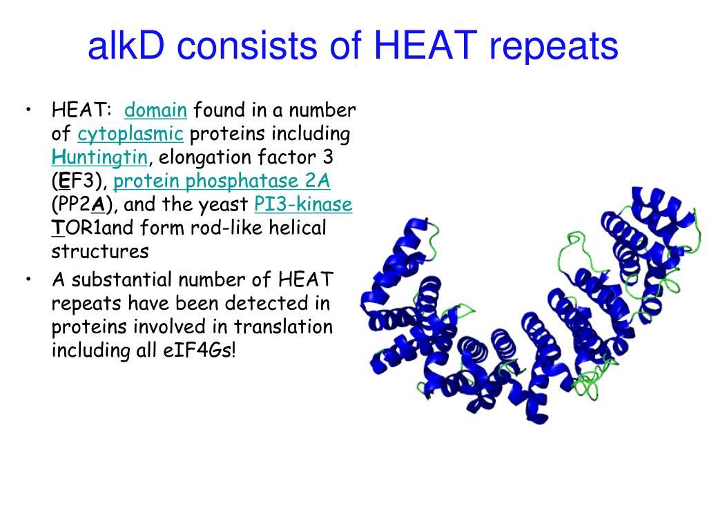 alkD consists of HEAT repeats