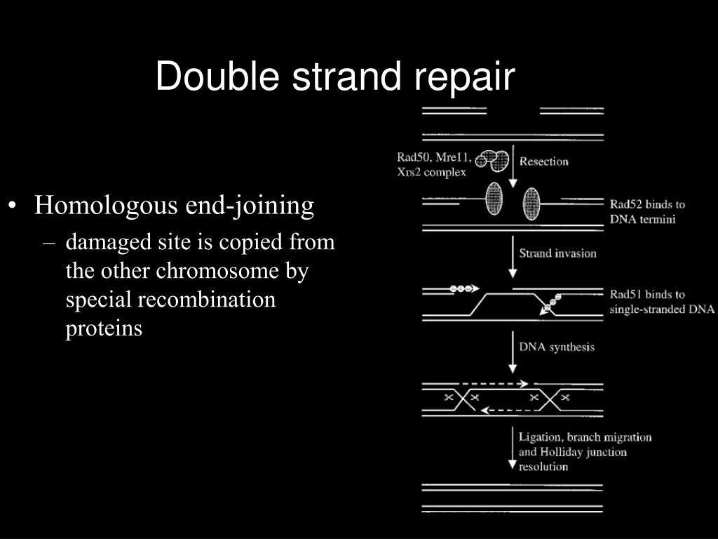 Double strand repair