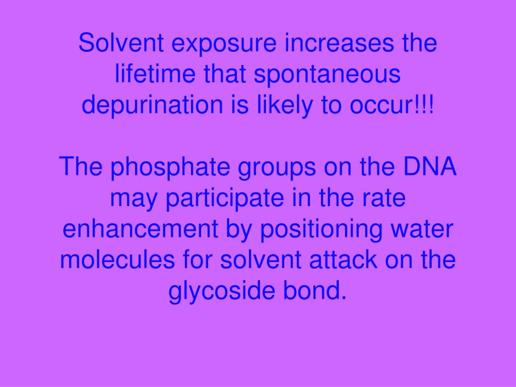 Solvent exposure increases the lifetime that spontaneous depurination is likely to occur!!!