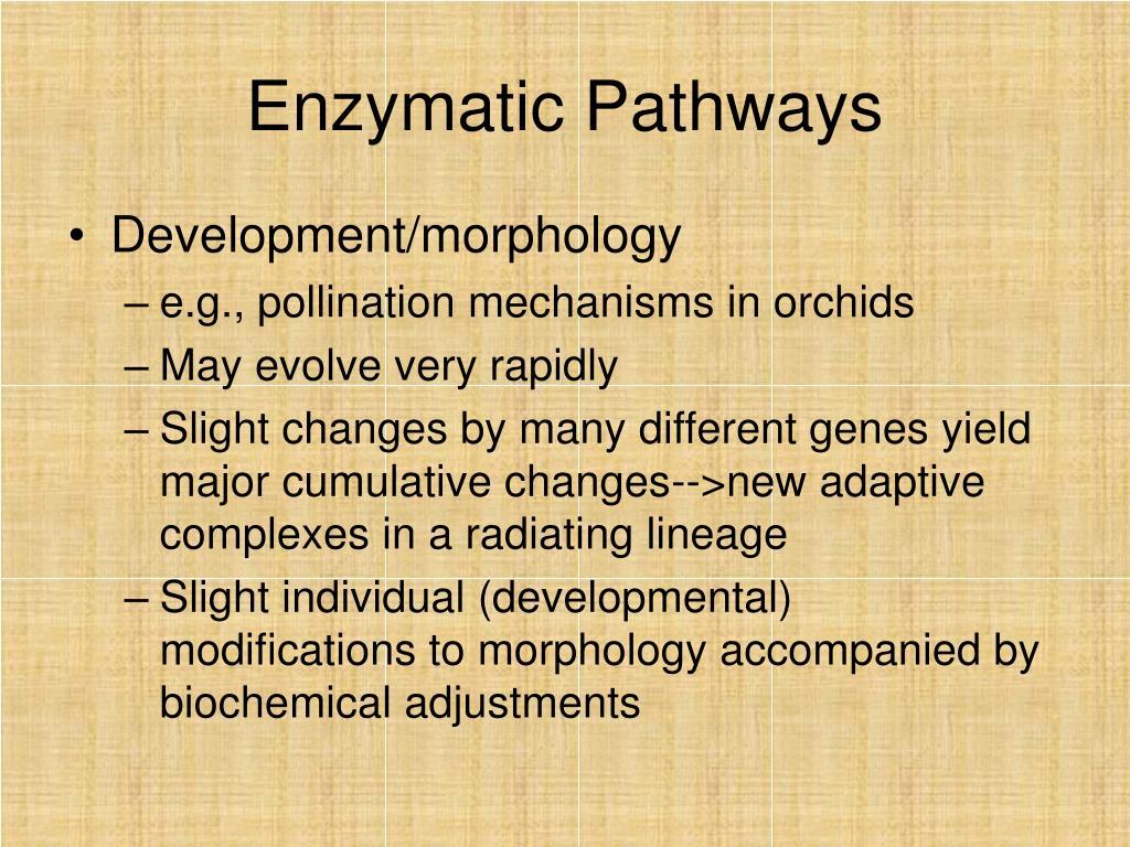 Enzymatic Pathways