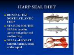 harp seal diet