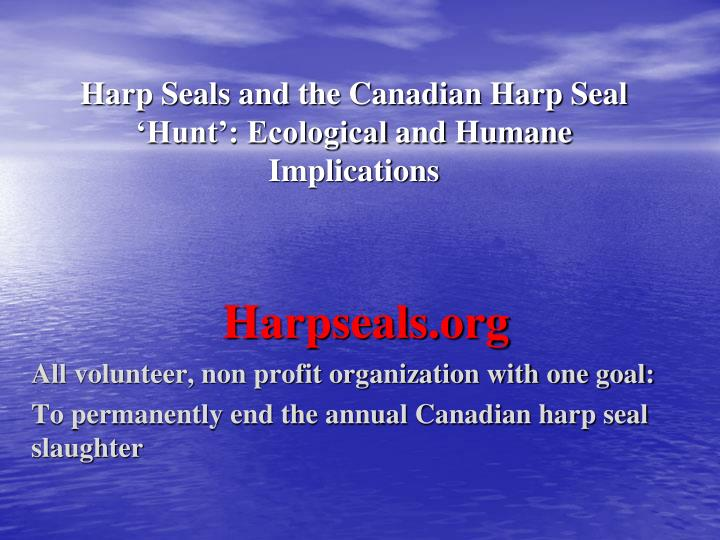 harp seals and the canadian harp seal hunt ecological and humane implications n.