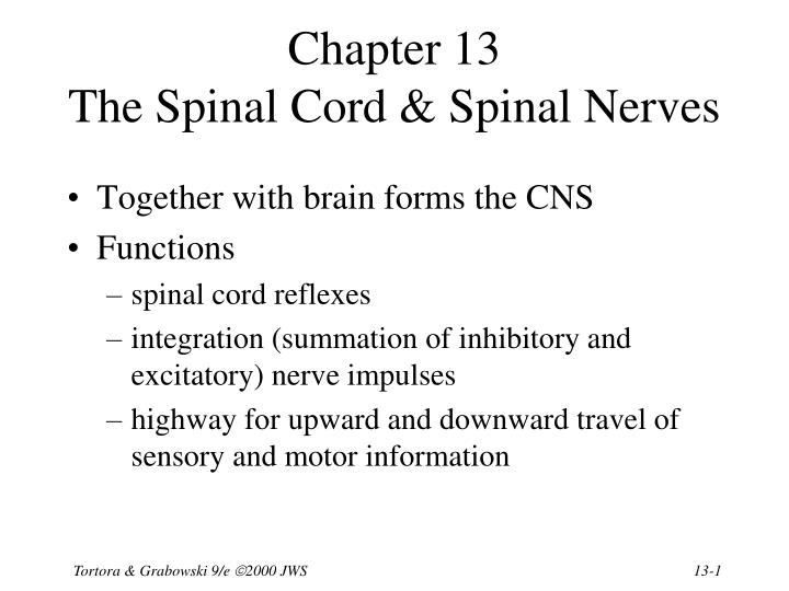 Chapter 13 the spinal cord spinal nerves