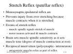 stretch reflex patellar reflex