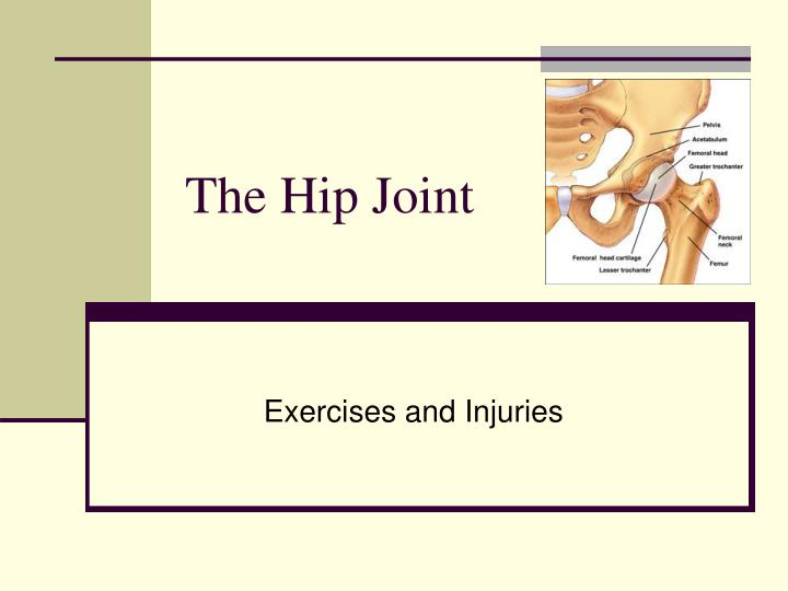 the hip joint n.