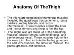 anatomy of thethigh