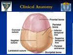 clinical anatomy1