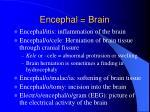 encephal brain