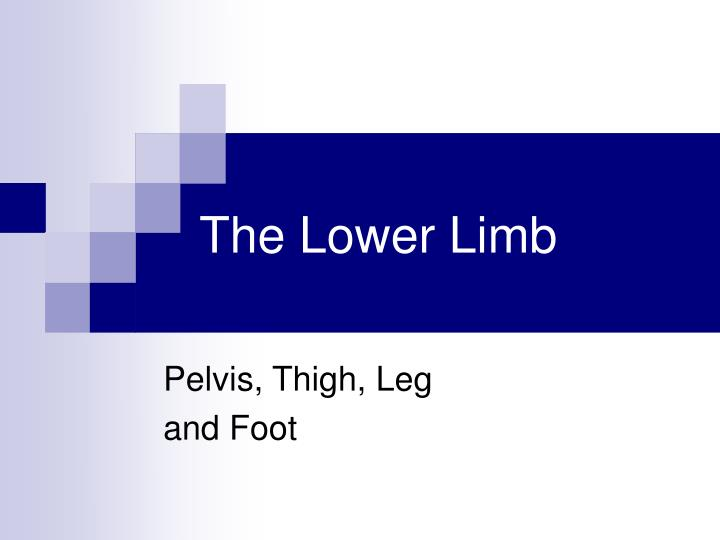 the lower limb n.