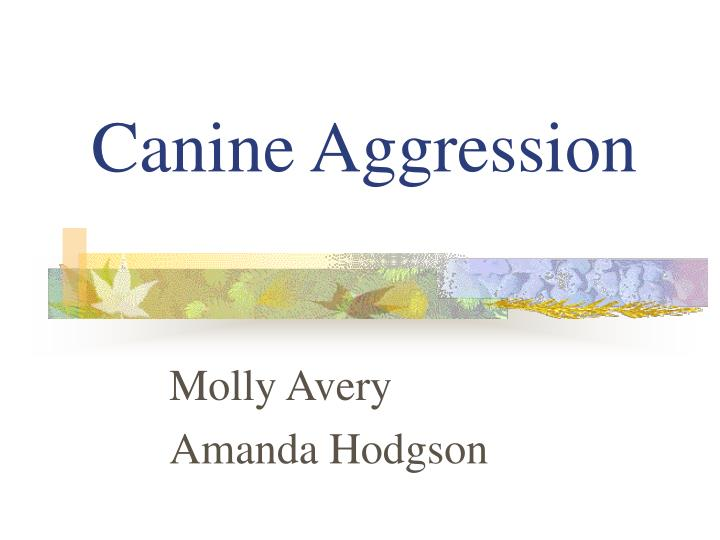 canine aggression n.