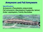 armyworm and fall armyworm