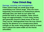 false chinch bug1