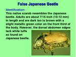 false japanese beetle1
