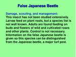 false japanese beetle2