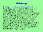 greenbug2