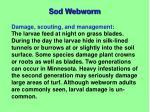 sod webworm2