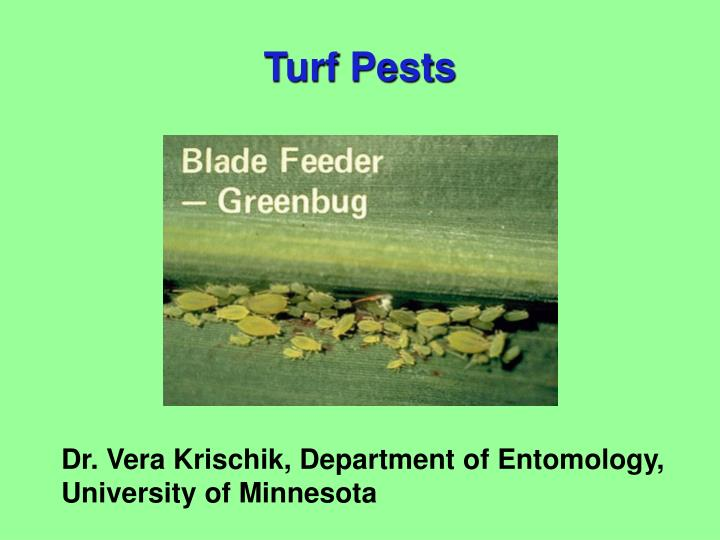 turf pests n.