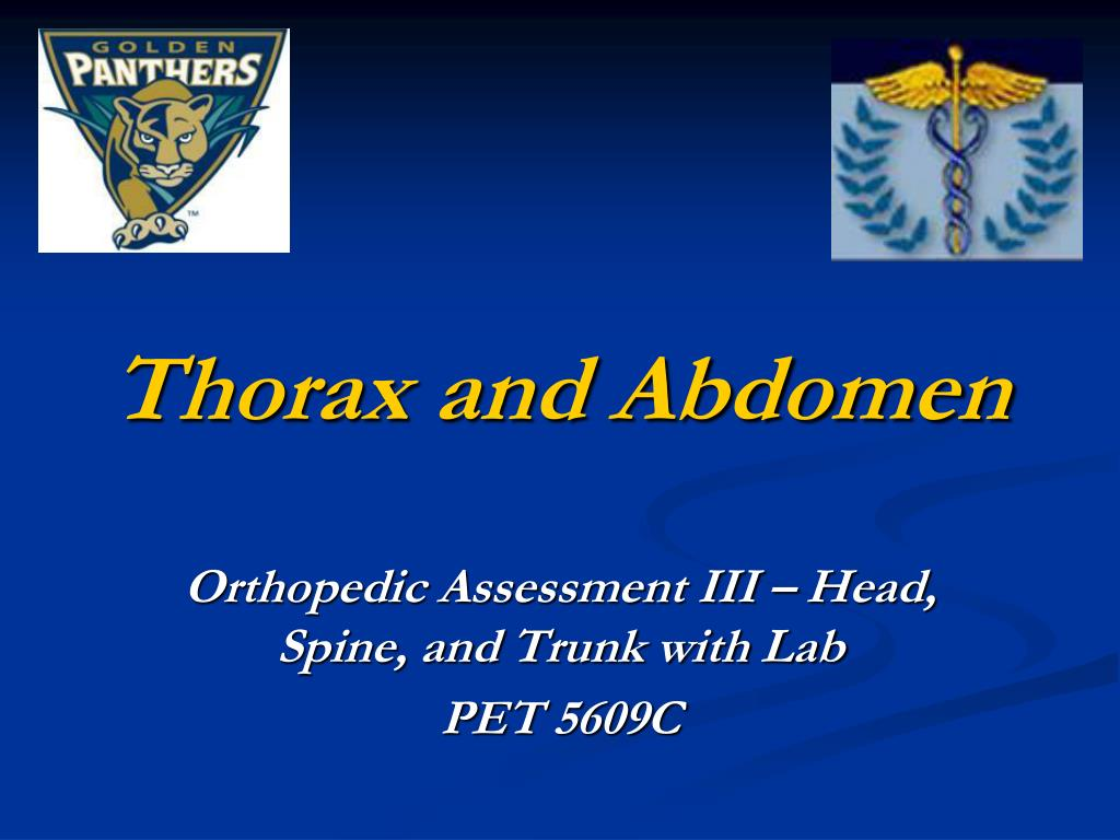 PPT - Thorax and Abdomen PowerPoint Presentation - ID:1185553