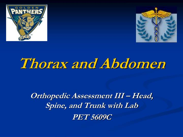 thorax and abdomen n.