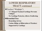 lower respiratory tract continued1