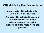atp yields by respiration type