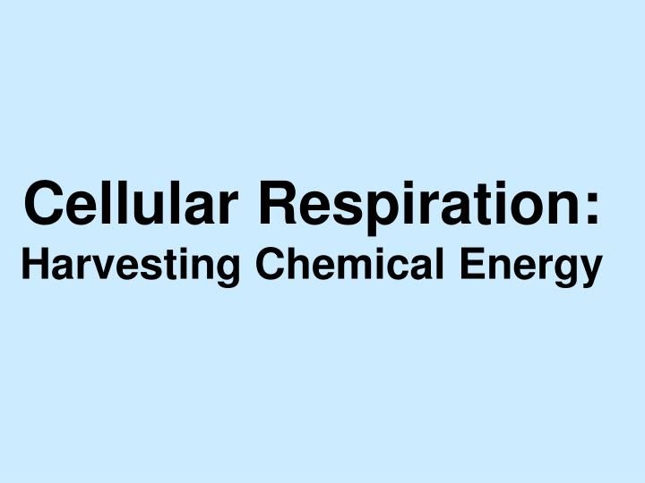 cellular respiration harvesting chemical energy n.