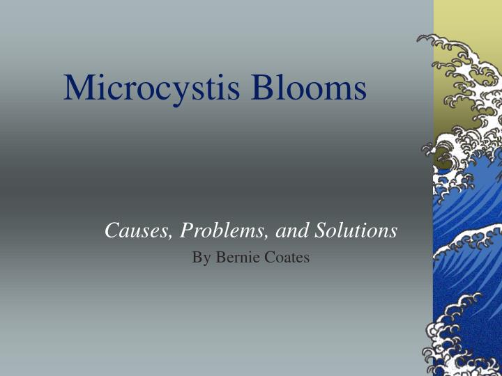 microcystis blooms n.