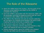 the role of the ribosome
