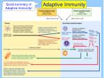 adaptive immunity2