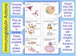 immunoglobulin actions