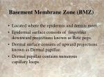 basement membrane zone bmz