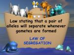 law stating that a pair of alleles will separate whenever gametes are formed