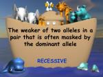the weaker of two alleles in a pair that is often masked by the dominant allele