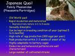 japanese quail family phasianidae pheasants partridges