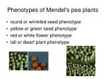 phenotypes of mendel s pea plants